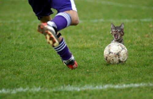 Кот шокирован